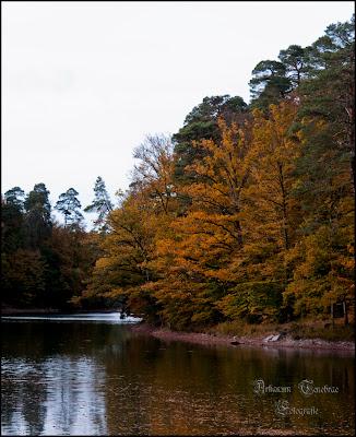 der Bärensee in Stuttgart im Herbst