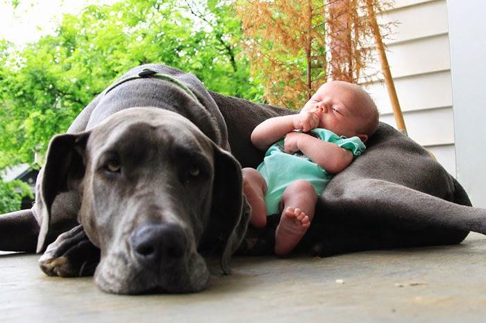 fotos de perros grandes