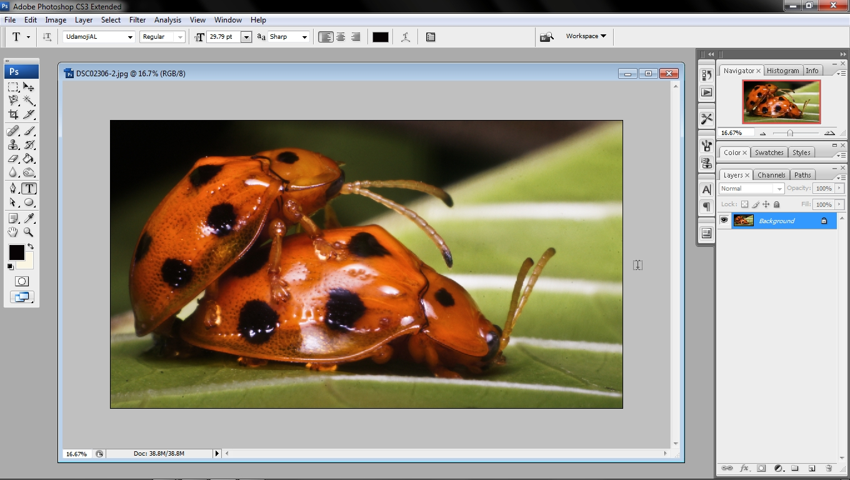 Tutorial Photography : Sharpkan gambar_Adobe Photoshop