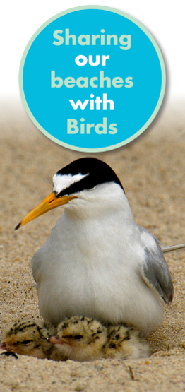 Sharing out beaches with birds leaflet