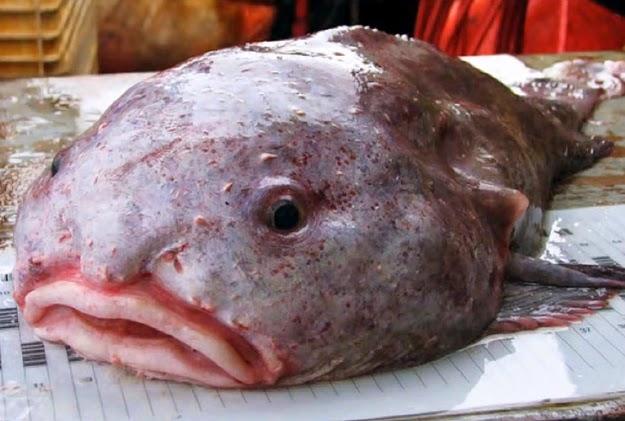 dGeneralist: Silent Wednesday 52 - Terrifying Deep Sea ...