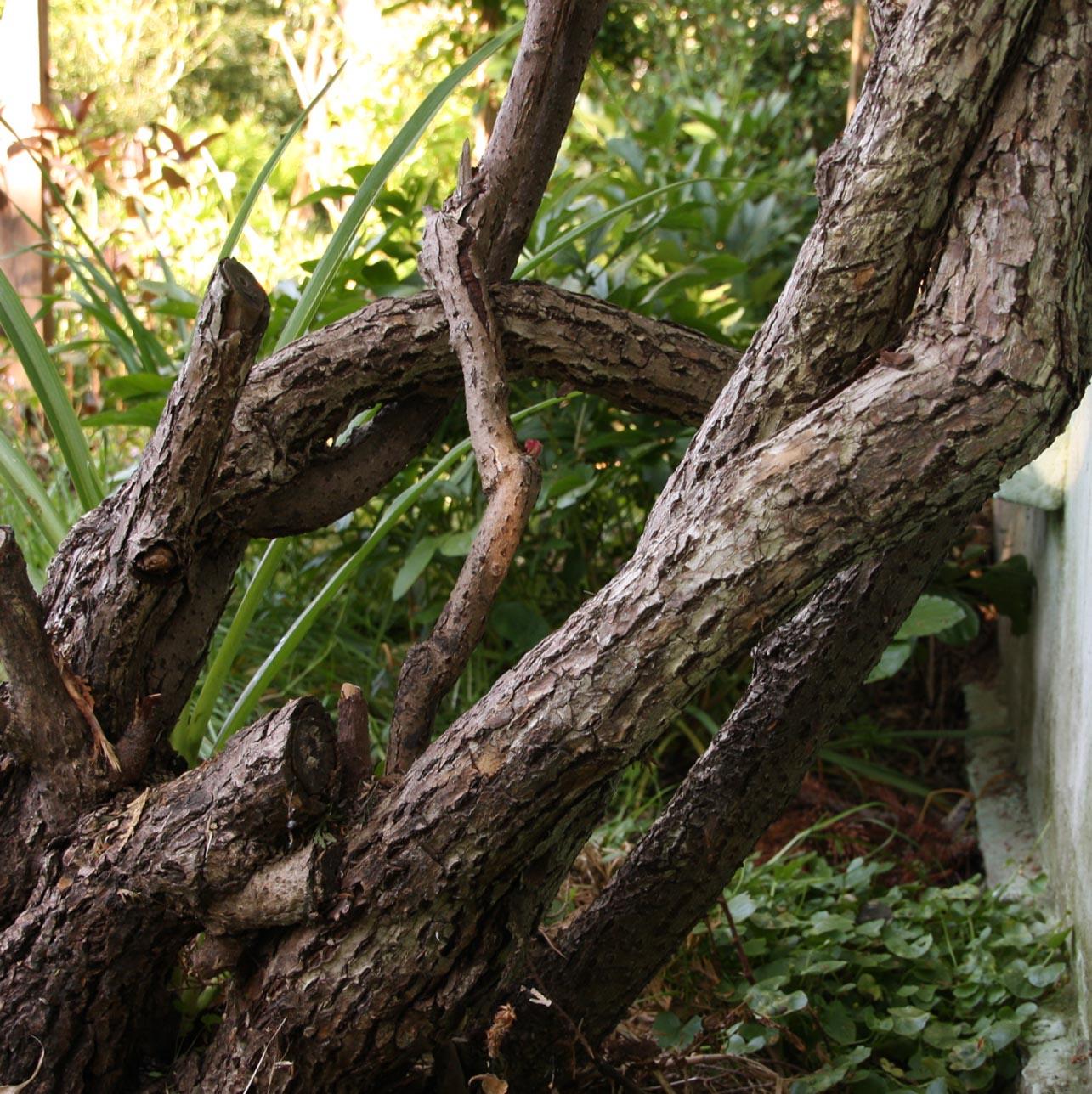 Die kiwi mit der kamera begleitet der kiwistamm unserer - Gartenhaus kiwi ...