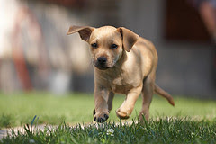http://bestdogtrainingcollarhq.com