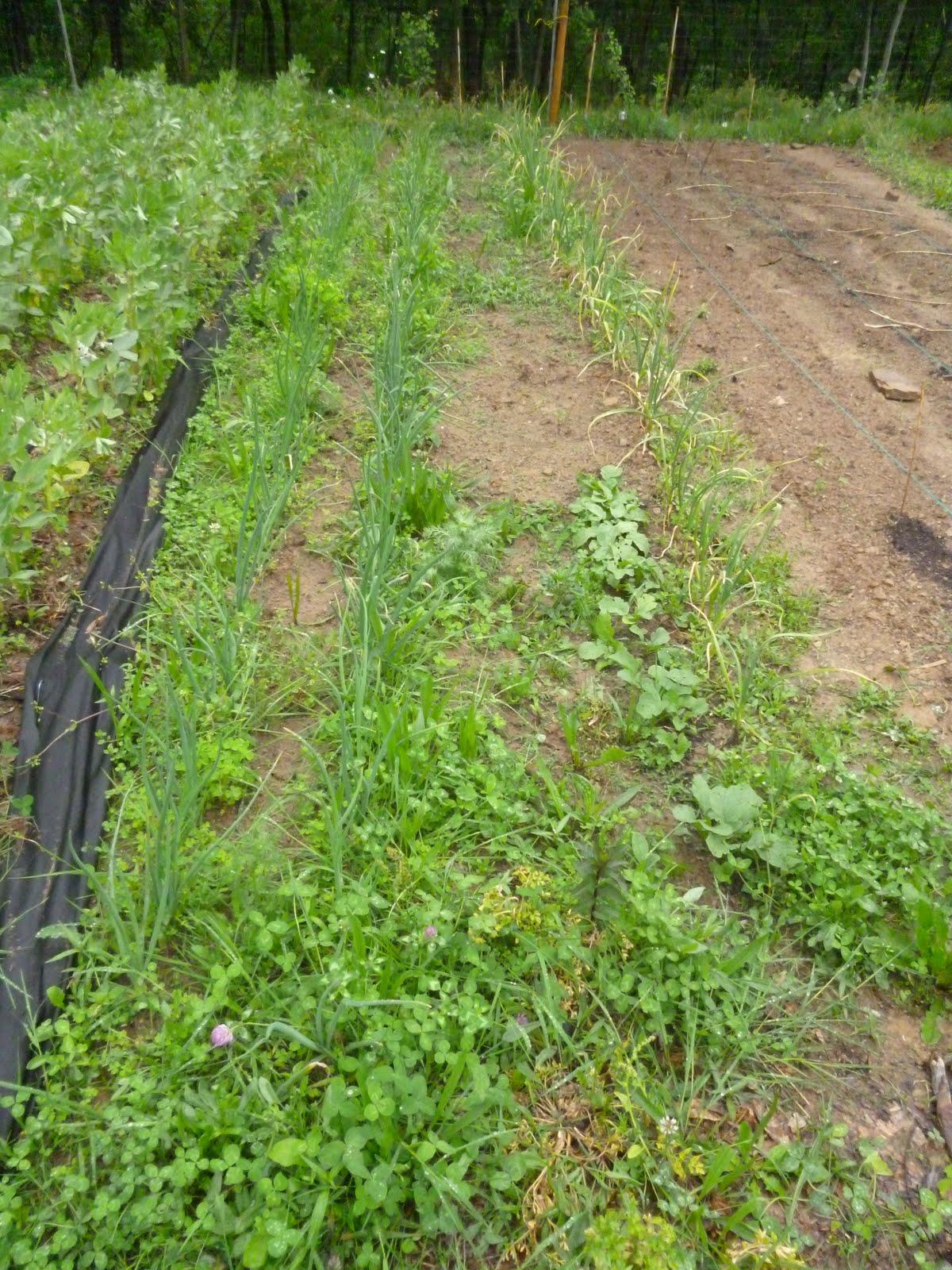 L 39 orto e altri maestri lotta alle infestanti o meglio - Cosa mettere al posto dell erba in giardino ...