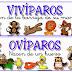 Animales Ovíparos y Vivíparos.