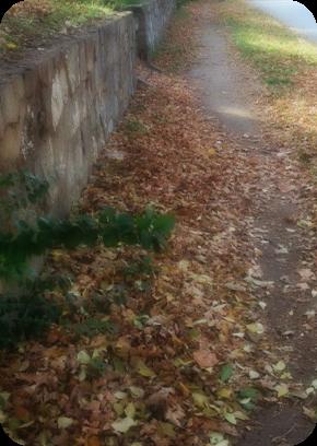 autumn fade - fayetteville, ar