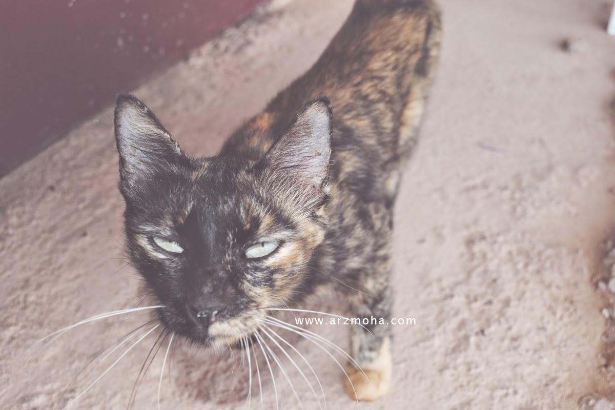 kucing muka garang, arzmoha.com, gambar cantik, amaran keras