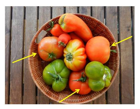 tomates varios