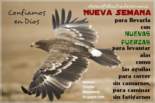 levantar alas como aguilas inicio de semana mensaje cristiano aguila en vuelo