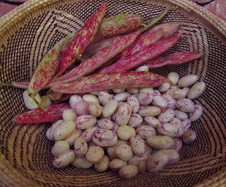 Pinto Beans and Shells in Basket