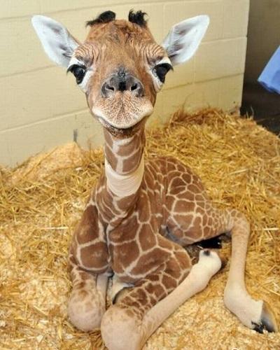 Photo bébé animaux