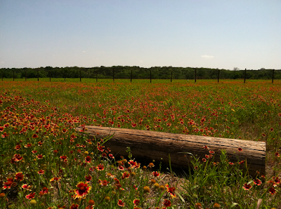 Pioneer Farms in Austin, Texas