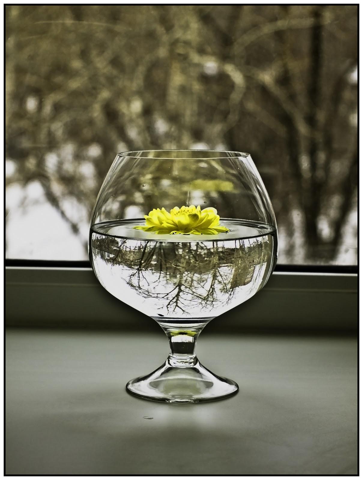 Фото цветы в стакане стакан