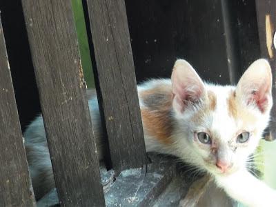 Foto-Foto Anak Kucing Lucu di Luar Jendela Kamar Kost Gue 06