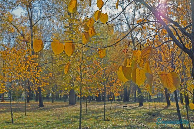 """Осенние листья в парке """"Наталка"""""""