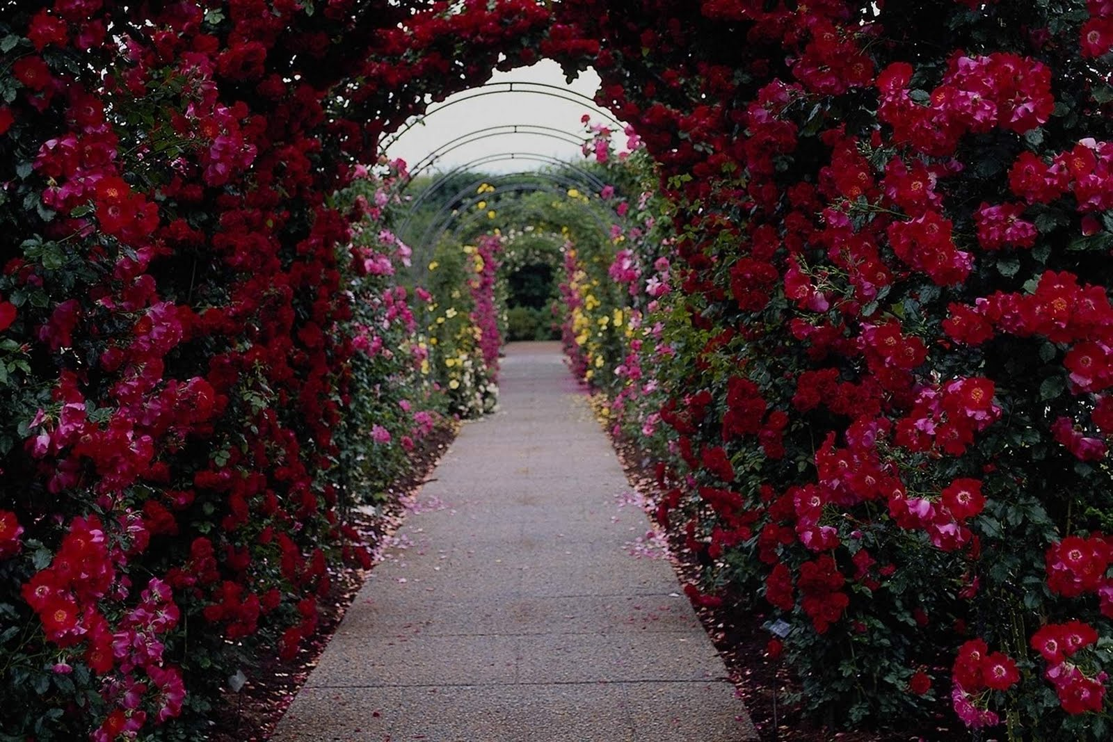 Funny image collection beautiful flower garden wallpapers for How to make a beautiful garden