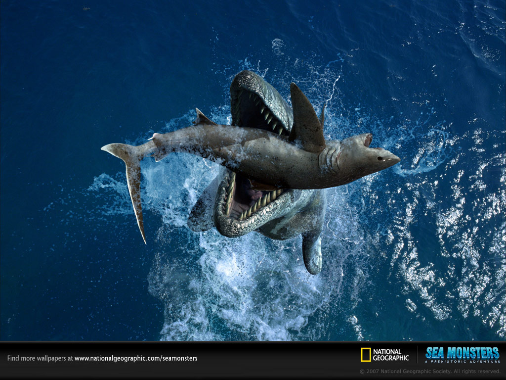 http://4.bp.blogspot.com/-EYteEbXkkfQ/T2b_Fx9xLZI/AAAAAAAAAo8/PxtwMkHogI0/s1600/tylosaurus-squalicorax-caught-on-camera-catching-a-shart-national-geographic.jpg