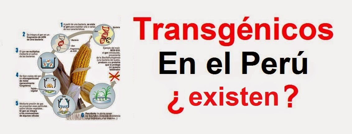 transgénicos-en-el-perú-base-legal
