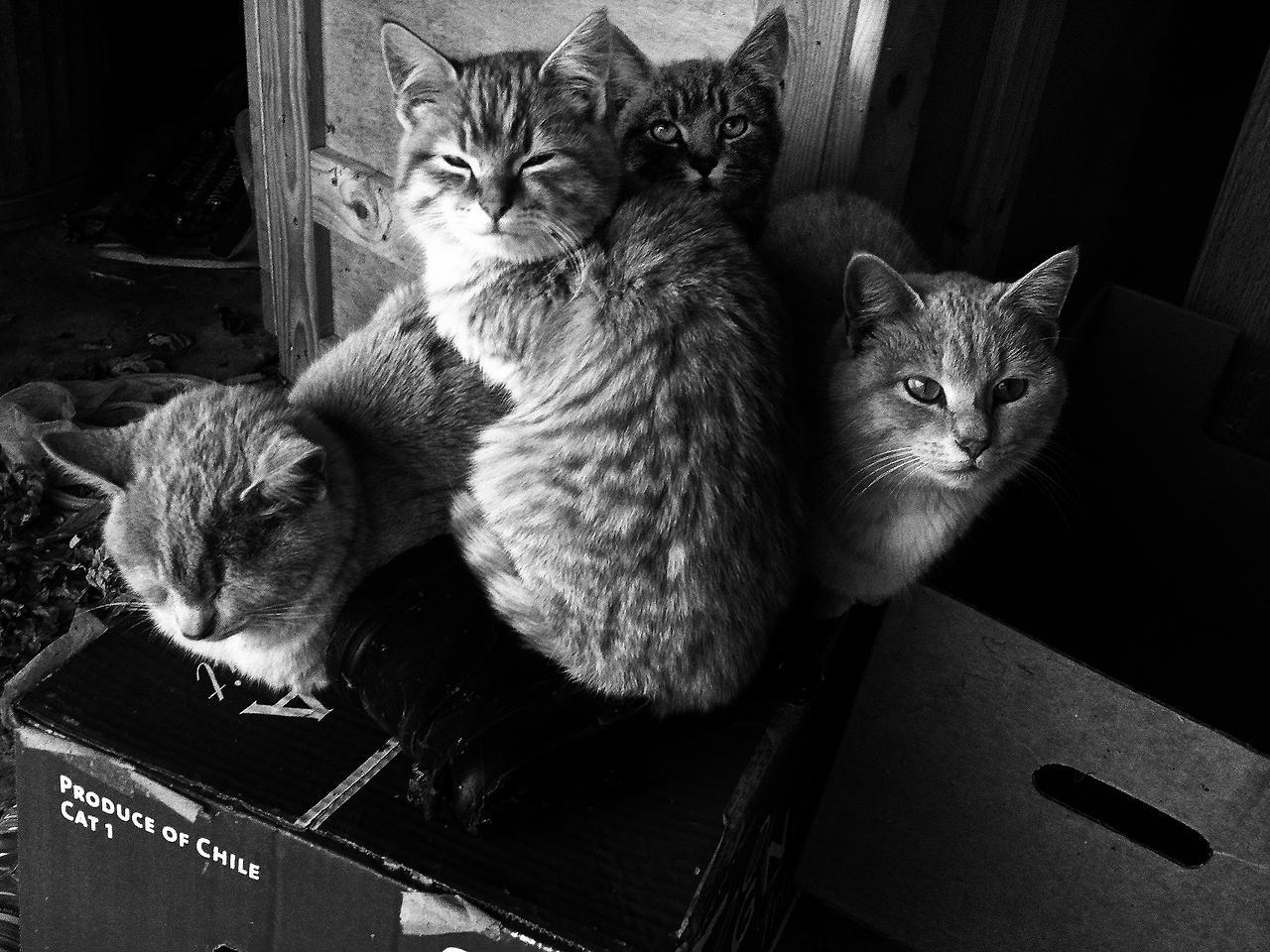 Коты. Произведено в Чили
