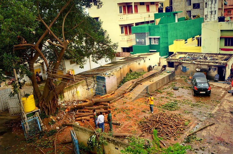 The place after a sixty year old tree was chopped off in Koramangala, Bangalore