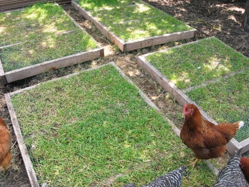 http://www.thegardencoop.com/blog/2012/02/07/grazing-frames-backyard-chickens/