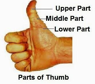Thumb Palmistry