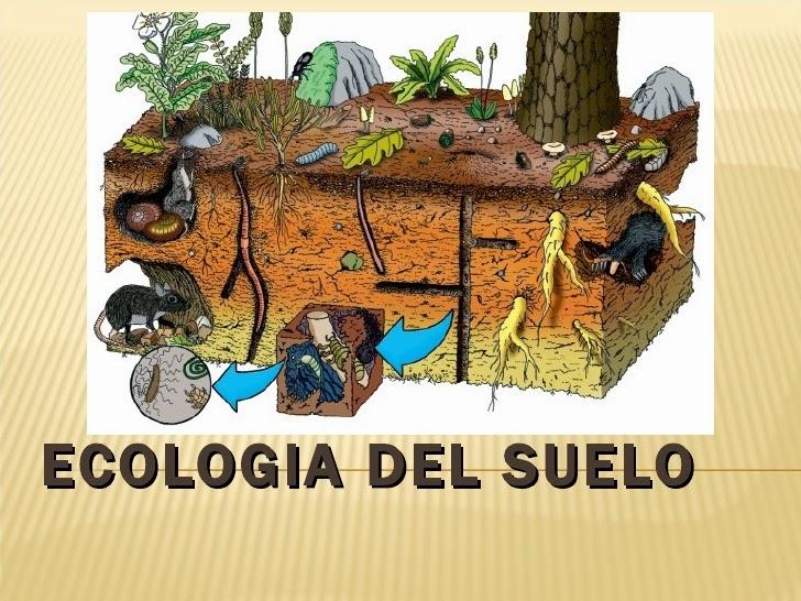biolog a del suelo mesofauna