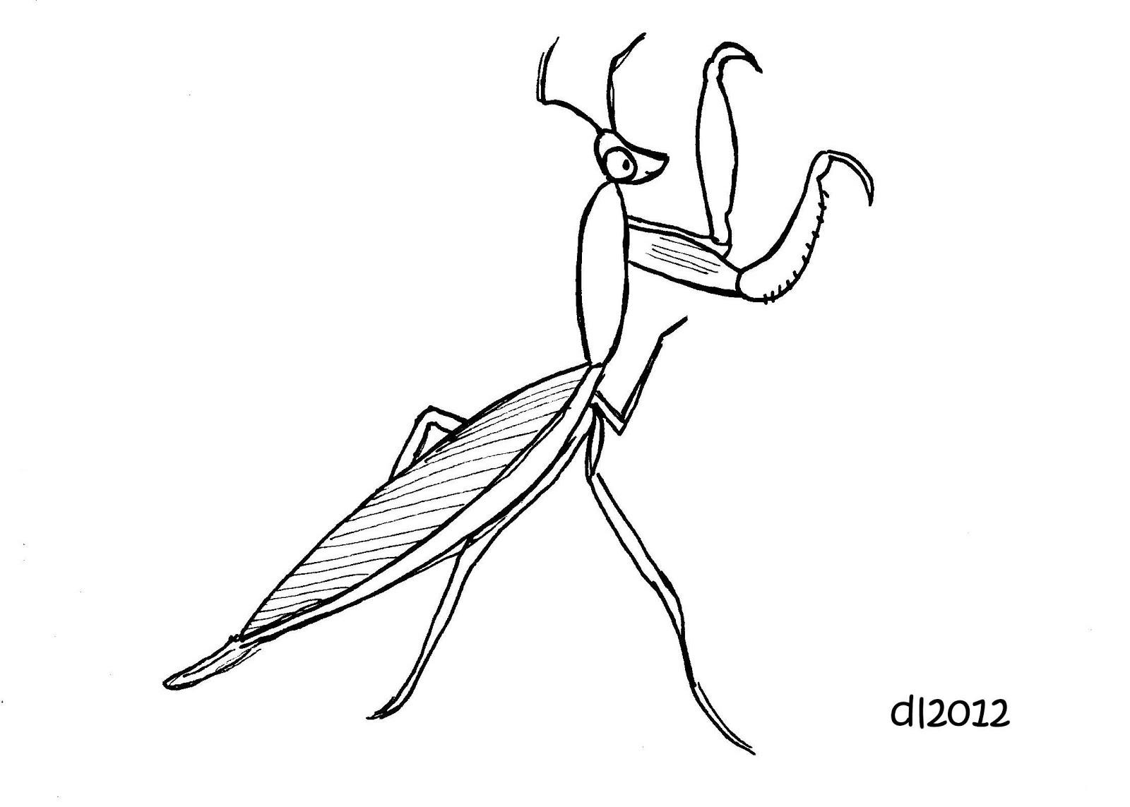 Black praying mantis