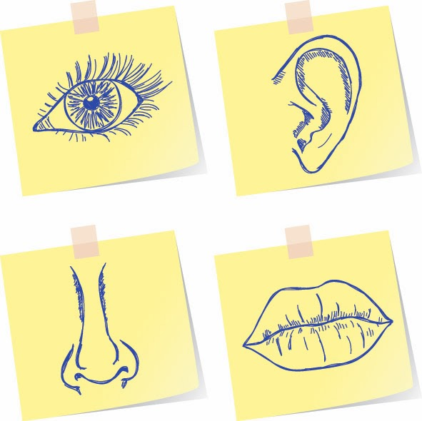 Illustration of 4 senses - vision, hearing, smell and taste