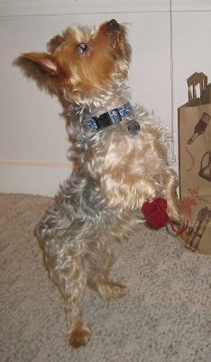 Free Crochet Patterns Dog Boots : CROCHET DOG BOOTIES PATTERNS Crochet Patterns Only