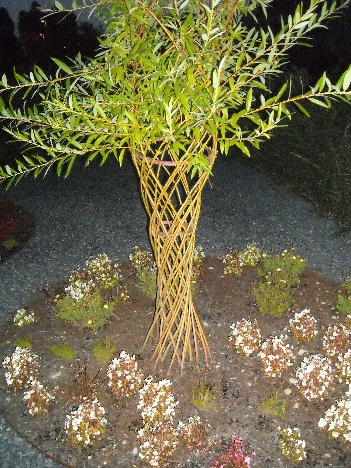 Carli os cesteiro cesteria viva vallados arbolitos etc - Arbolitos para jardin ...