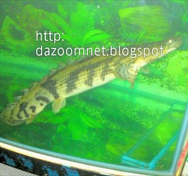 Ikan tertera nama Allah