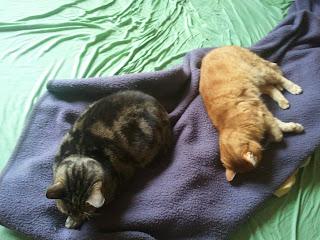 2011 07 15+11.05.19 - DER Wandel des Mittagsschlafes