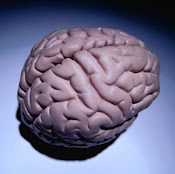 Imagem do Cérebro Saudável