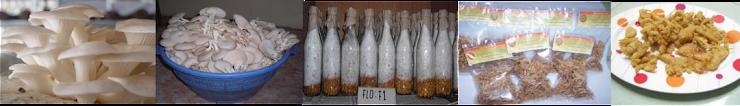 Gambar Jamur