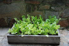 Lettuce box