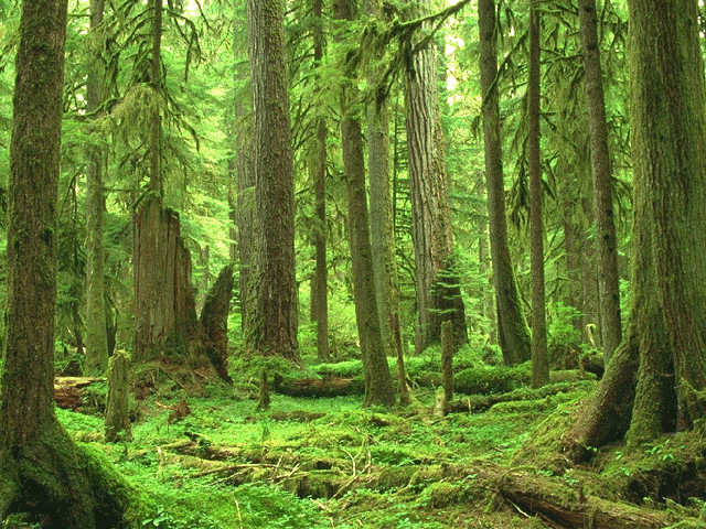 forest is the ultimate sustainable cooperative community