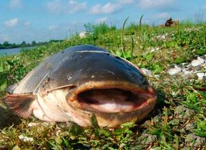 Где ловить щуку на жерлицы что кормовая рыба