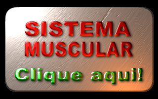 SISTEMA MUSCULAR