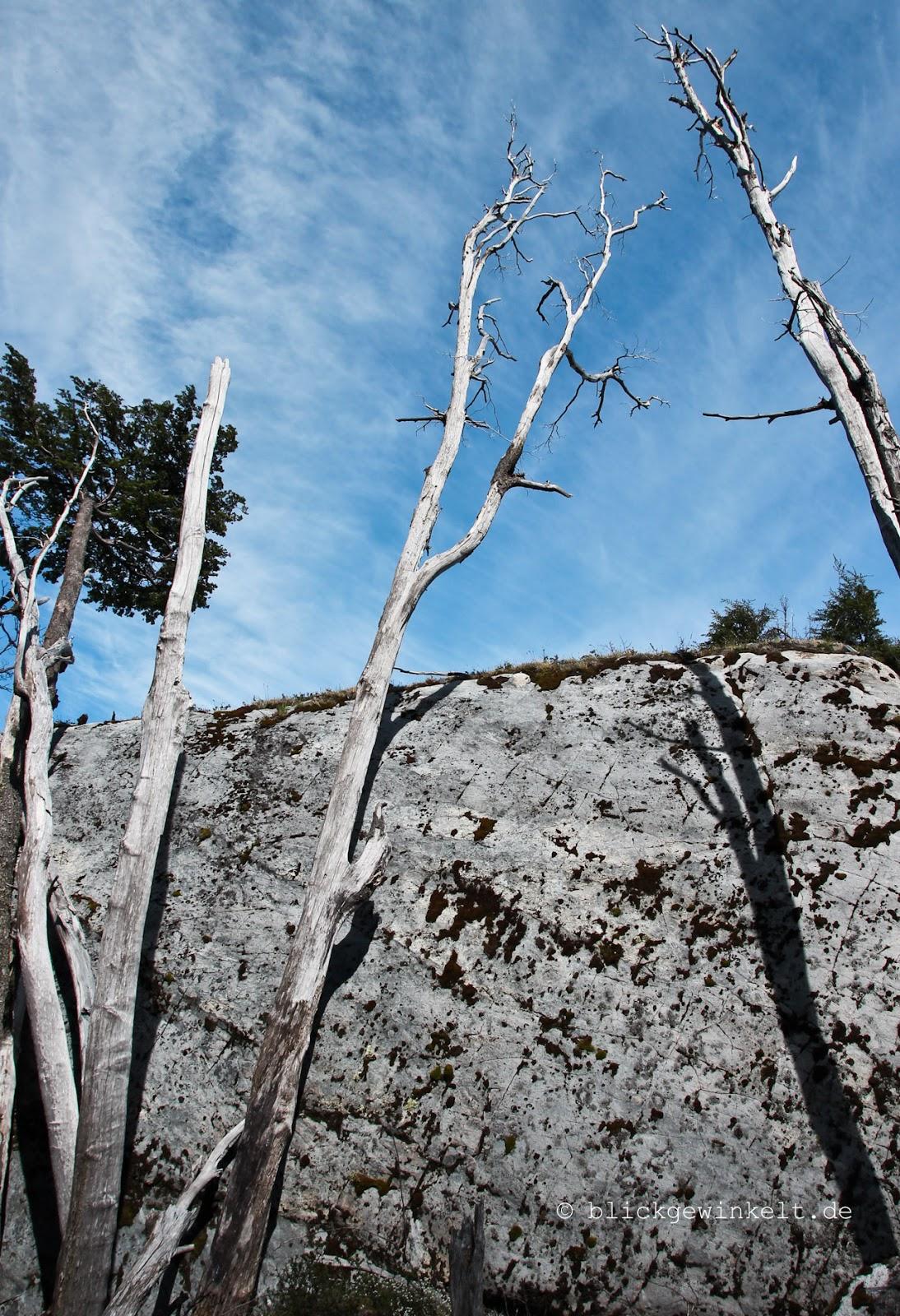 Verbrannte Bäume im Torres del Paine