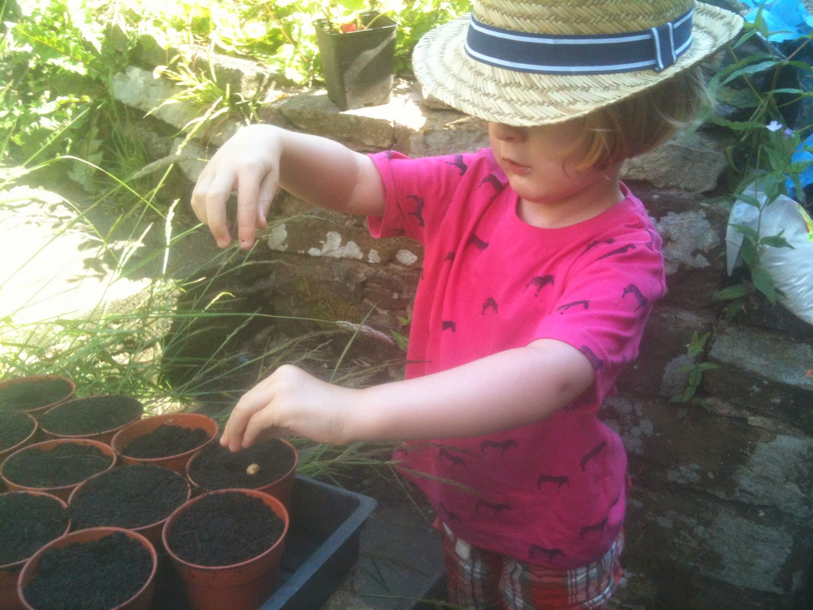 Sowing large seeds with small children, they're easier to handle