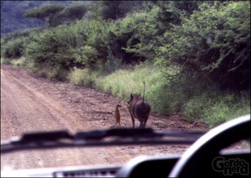 Timão e Pumba na vida real