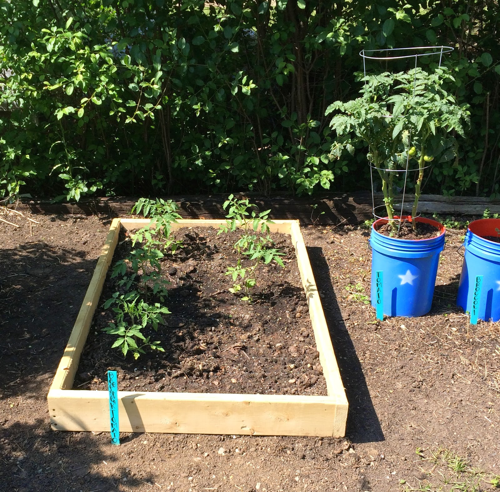 Mini tomato garden, The Graffitied Gardenia