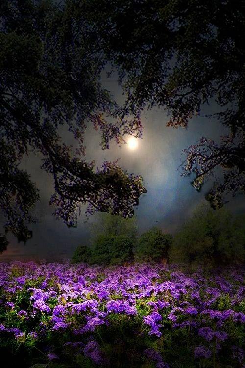Paisajes Y Lugares Hermosos Paisajes Con Luna Llena