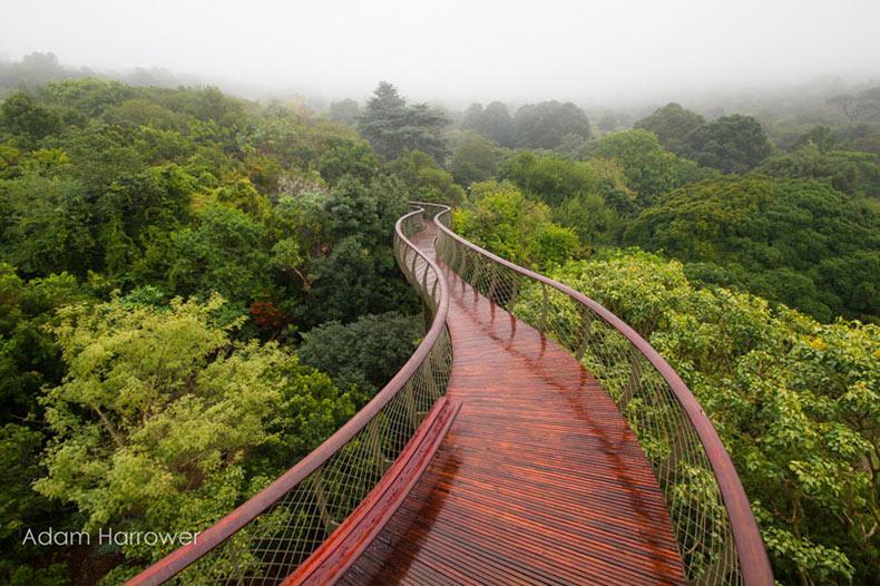 Este Puente Colgante en Ciudad del Cabo te permite caminar sobre los árboles