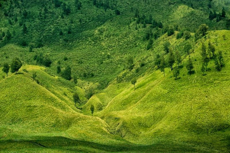 Bukit Savana Telletubies