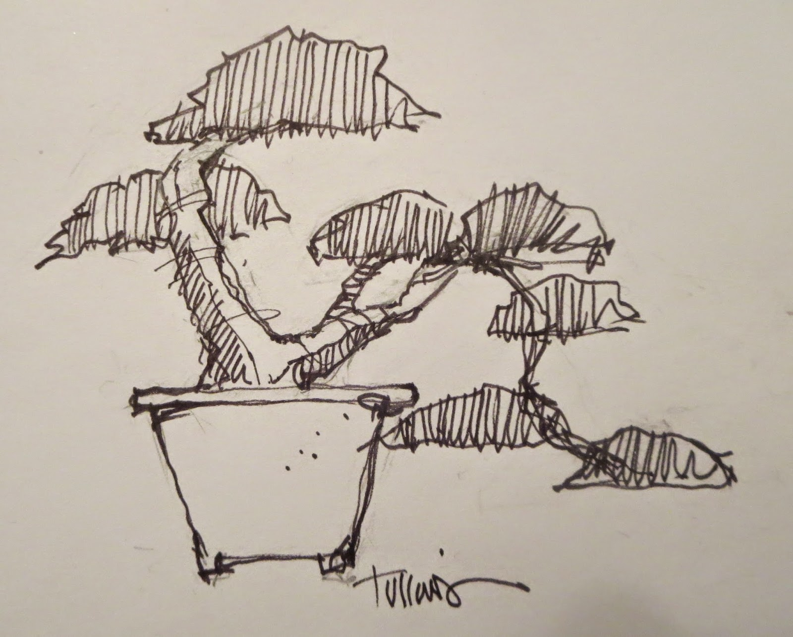 Akron Canton Bonsai Society Easy Drawing Method S For Bonsai Projects