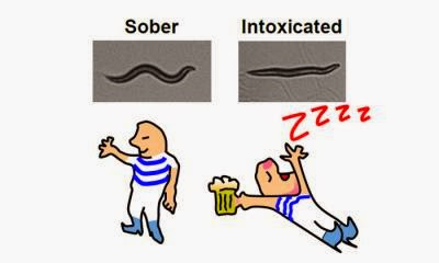 Image showing a sober and an intoxicated worm