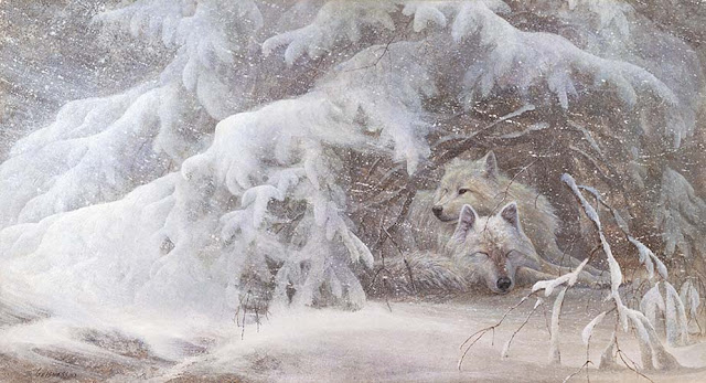 White Wolf Duane Geisness Talented Midwestern Wildlife