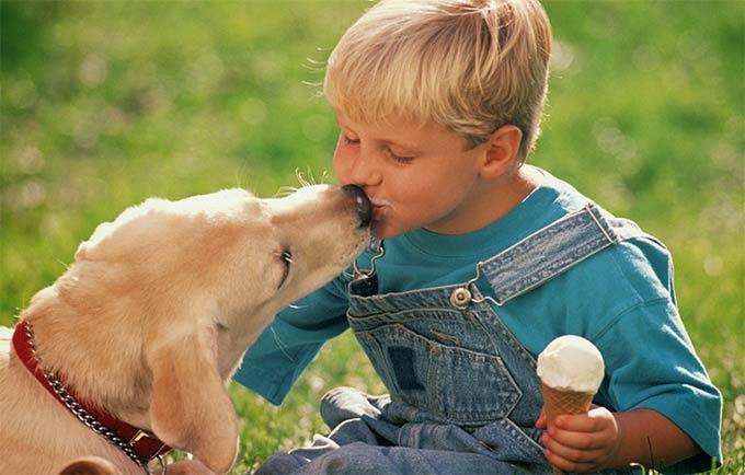 Cachorro pode comer sorvete?